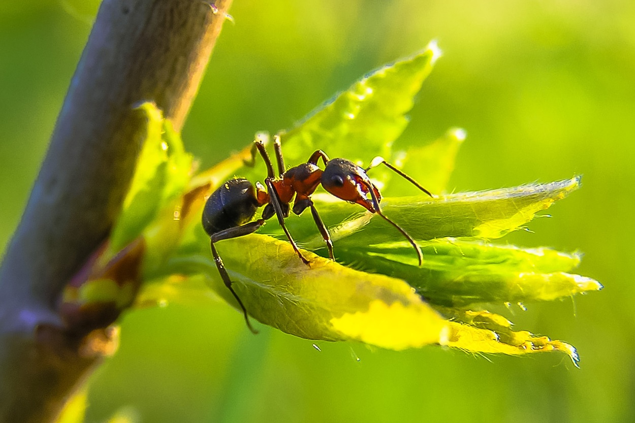 why having an ant farm is so cool elvira katelin